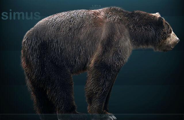 File:Arctodus simus.jpg
