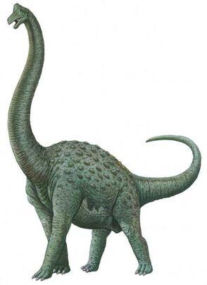 Pcab224 pelorosaurus