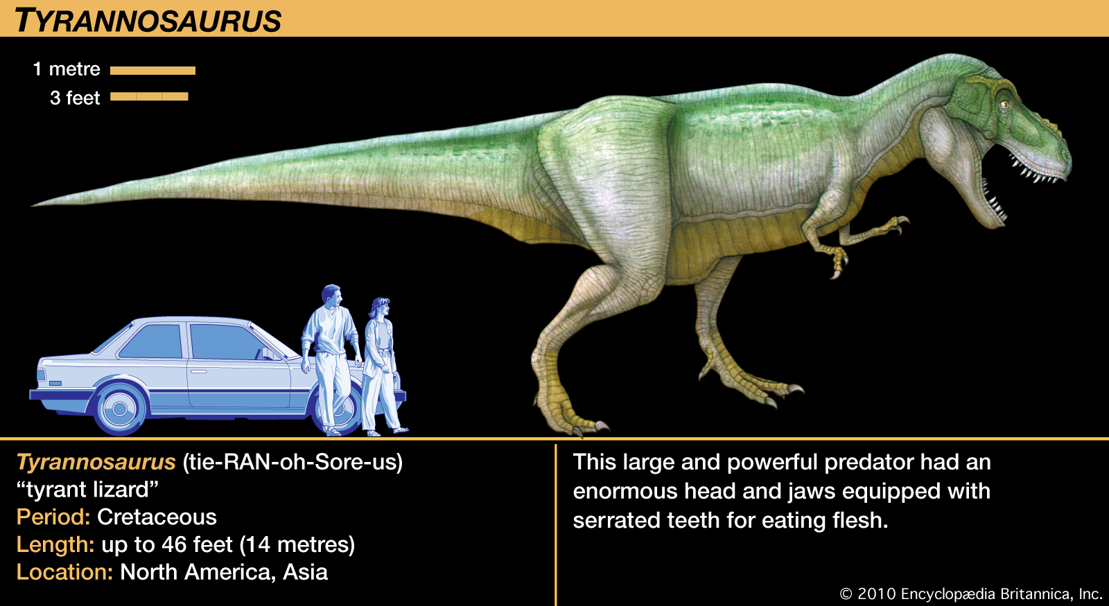 Image - T-rex fact card.jpg | Dinopedia | Fandom powered by Wikia