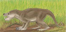 Psittacotherium