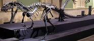 Ceratosaurus mountedclose