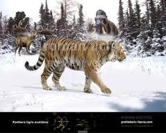 Panthera-t-ac-738x591.jpg