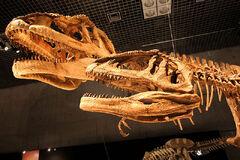 800px-Mapusaurus skulls