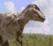 Tarbosaurus5