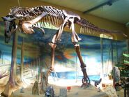 Carnotaurus sastrei 1