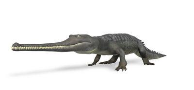 Thoracosaurus Walk