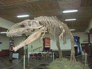 Inauguraron-el-parque-de-la-prehistoria006-replica-giganotosaurus-carolini