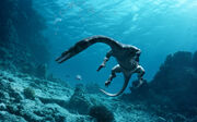 Sea rex 546