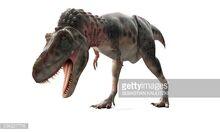 Tarbosaurus GI