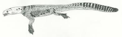 Helveticosaurus