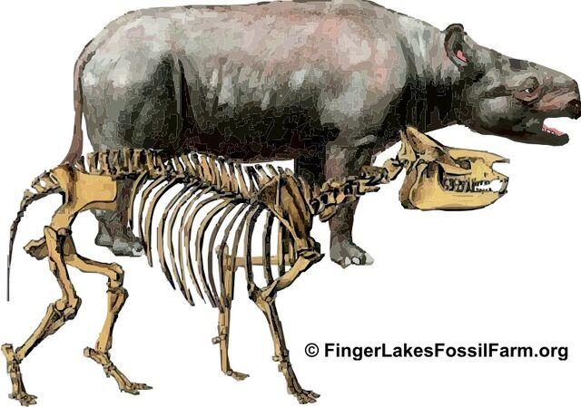 File:Subhyracodon-large.jpg