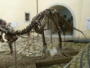 CarnotaurusSastrei