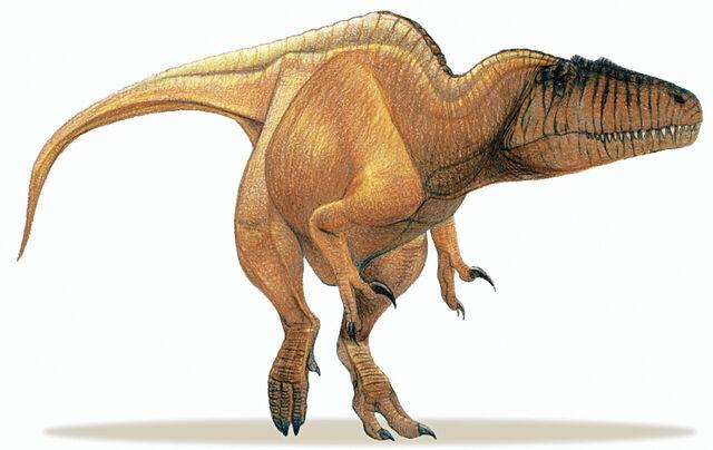 File:Basal Carcharodontosaurid.jpg