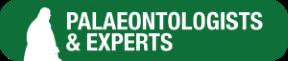Mp-expert-icon
