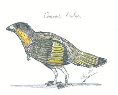Concornis lacustris by wbuckland-d3gvbhl