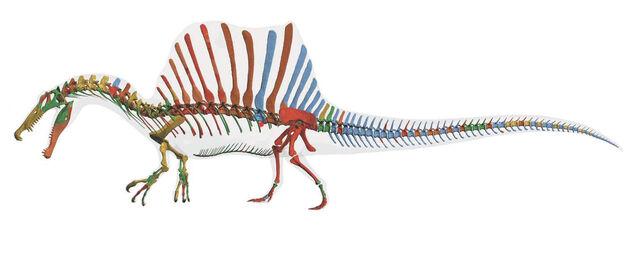 File:Spinosaurusskeleton.jpg