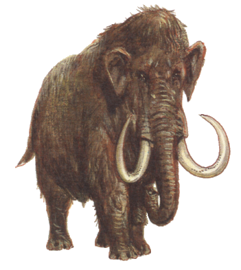 File:Mammuthus primigenius.png