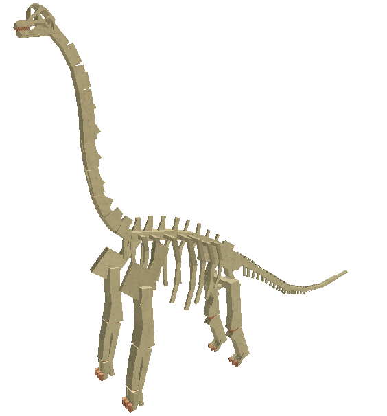 Fossil Brachiosaurus