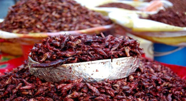 File:Crickets.jpg
