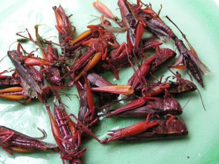 File:Locust.jpg
