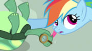 File:180px-Rainbow Dash getting affection S3E11.png