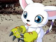 Gatomon-kari-kamiya-and-gatomon-17892345-640-480