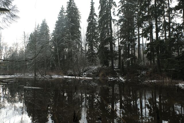 File:Once Upon a Time - 6x13 - Ill-Boding Patterns - Photography - Forest.jpg