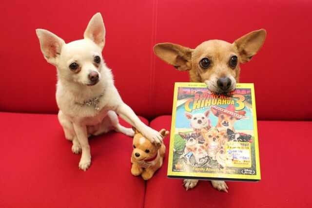 File:Angel y Rusco con DVD y peluchito t750x550.jpg