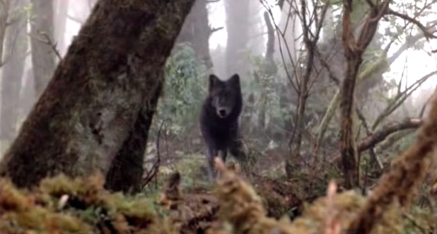 File:Timber Wolf 2.png