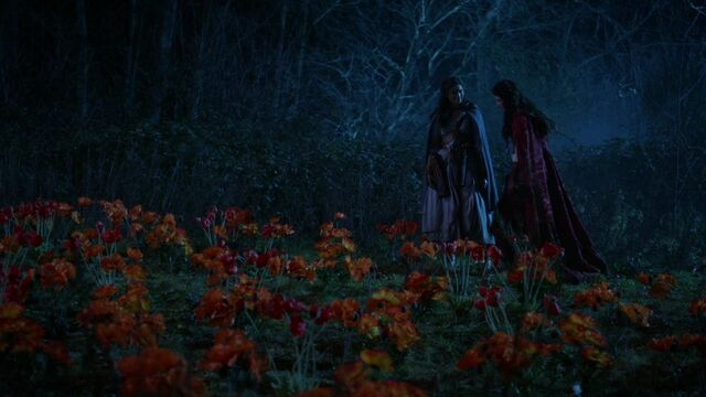File:Once Upon a Time - 5x18 - Ruby Slippers - Poppy Field.jpg