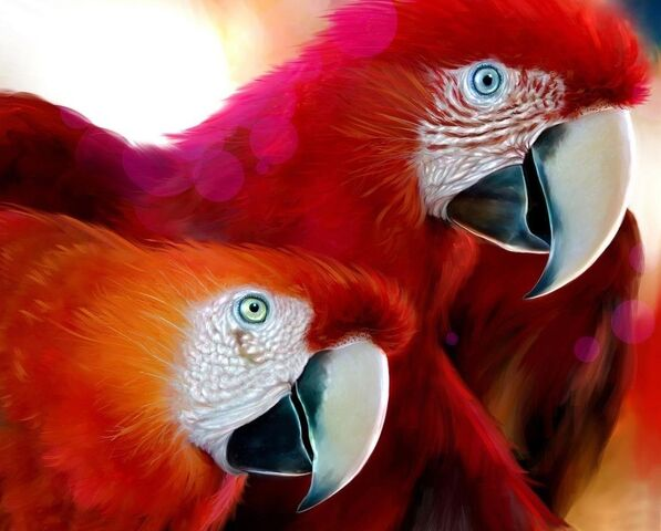 File:Red parrots wallpaper 50818.jpg