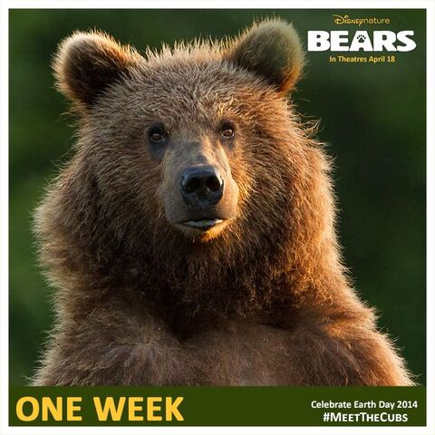 File:Bears One Week Poster.jpg