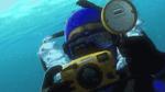 A113 Finding Nemo