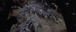 Dalmatian-Puppies-1996-2