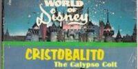 Cristobalito, the Calypso Colt