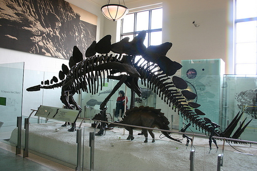 File:Stegosaurus stenops.jpg