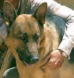 File:Beast Delgado Beaverly Hills Chihuahua.jpg