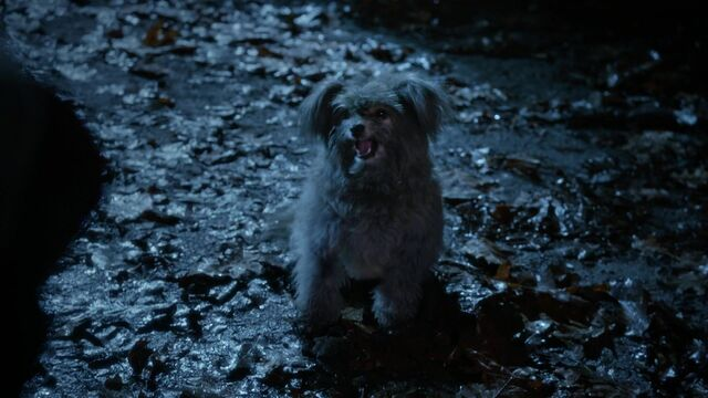 File:Once Upon a Time - 5x18 - Ruby Slippers - Toto.jpg