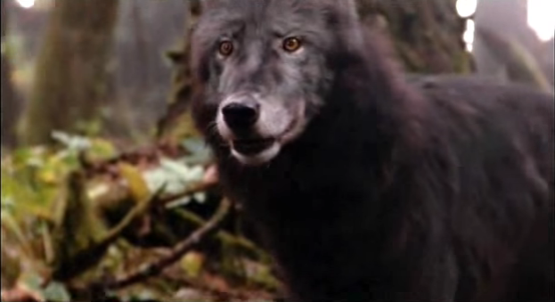 File:Timber Wolf 4.png