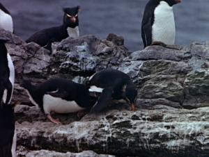 File:1960-islands-4.jpg