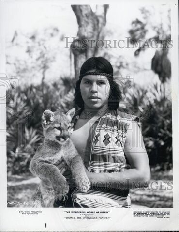 File:Shokee the everglades panther press photo.jpg