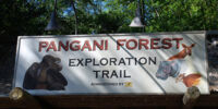 Pangani Forest Exploration Trails