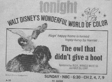 File:The owl that didn't give a hoot.jpg