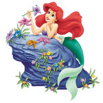 Ariel on rock
