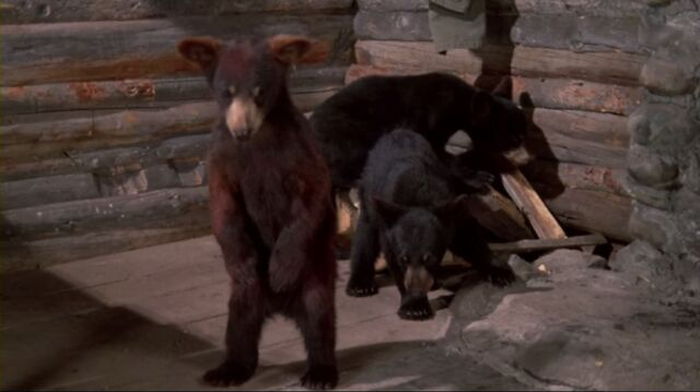 File:Some bears from The Bears and I.jpeg