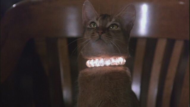 File:The Cat From Outer Space 2.jpg