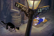 Donald about to run into a cat
