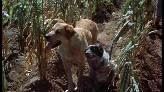 File:Old Yeller and Miss Priss.jpg