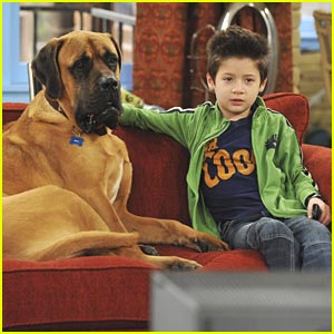 File:Davis-cleveland-dog-tv-watcher.jpg
