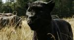 The Jungle Book 2016 (film) 22